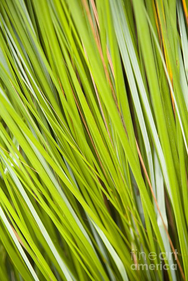 Plant Details Photograph
