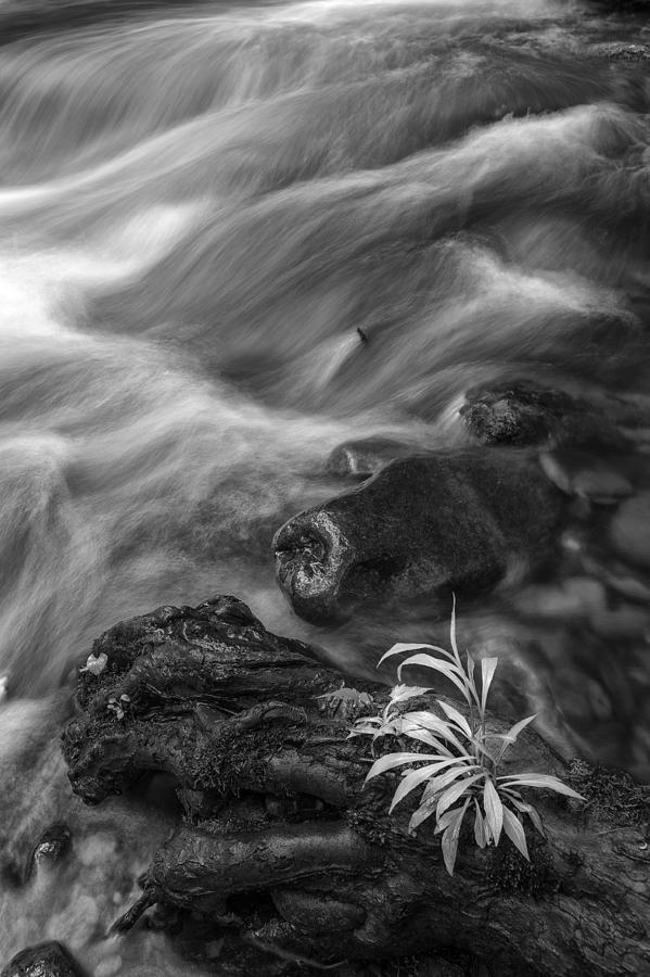 Vertical Photograph - Little Plant by Jon Glaser