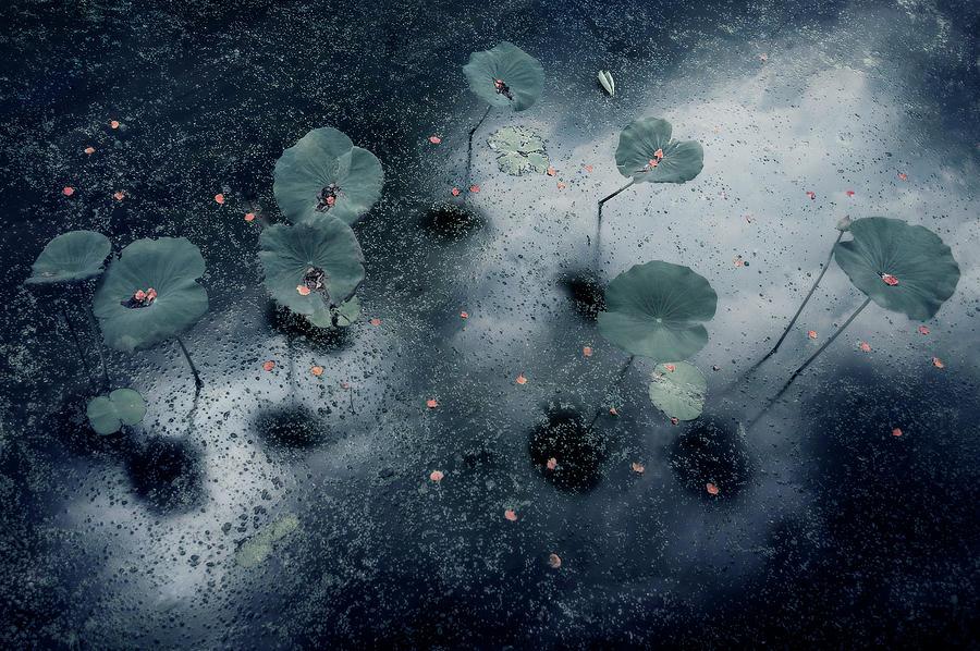 Water Photograph - Plant In The Galaxy by Ekkachai Khemkum