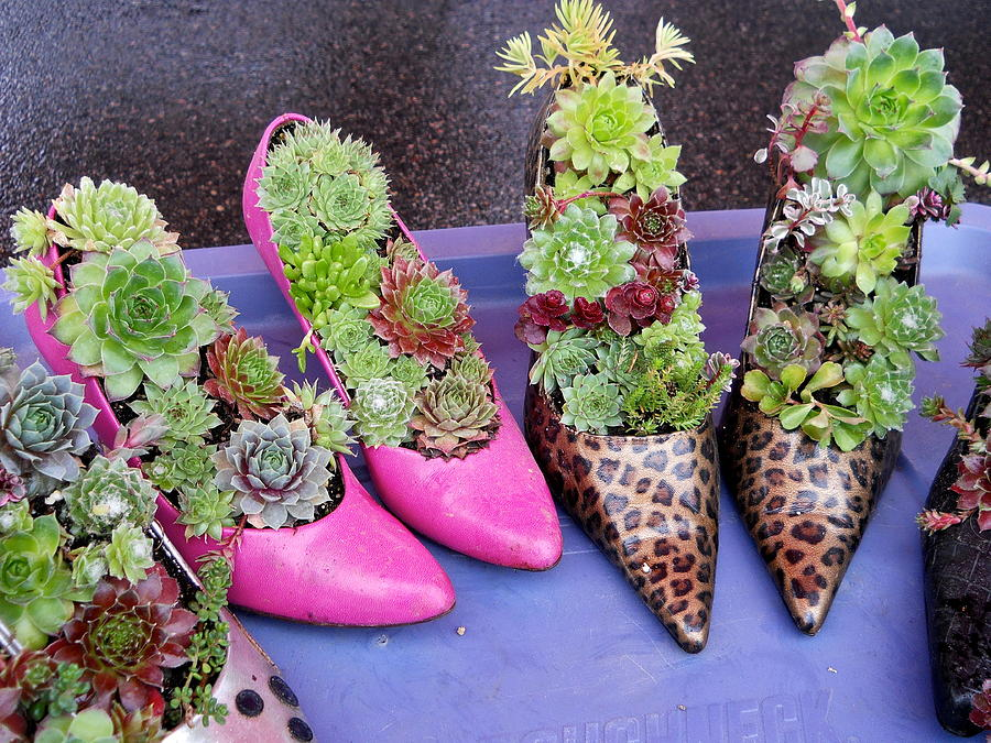 Plants in Pumps by Kent Lorentzen
