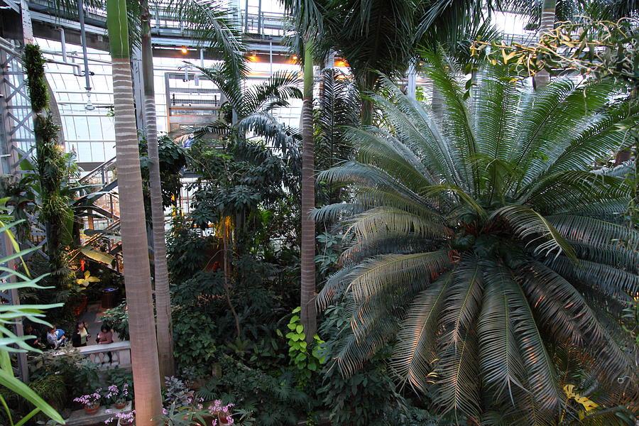 Washington Photograph - Plants - Us Botanic Garden - 011311 by DC Photographer