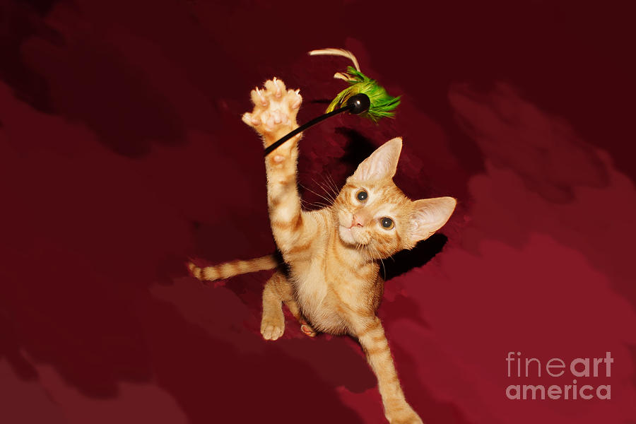 Kitten Photograph - Play Time by Lynda Dawson-Youngclaus