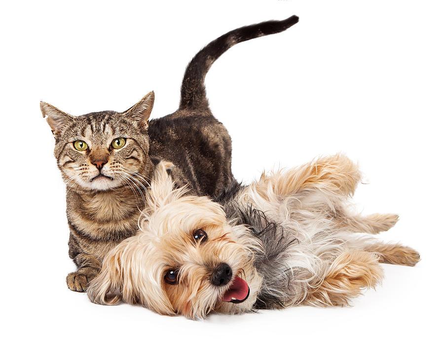 Cat Photograph - Playful Dog And Cat Laying Together by Susan Schmitz