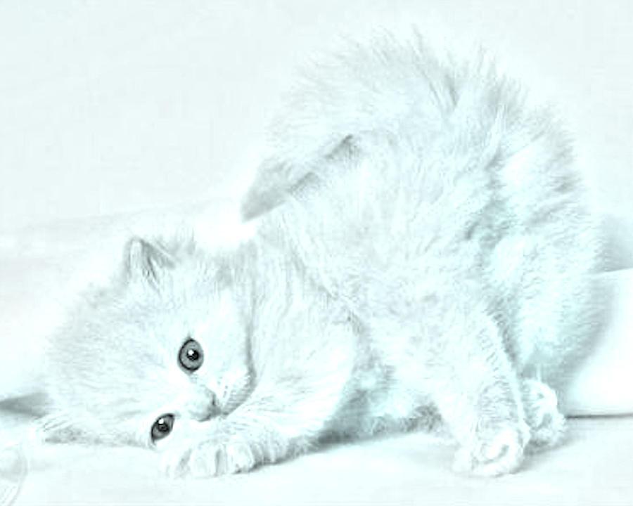 Animal Photograph - Playful Kitty by J D Owen