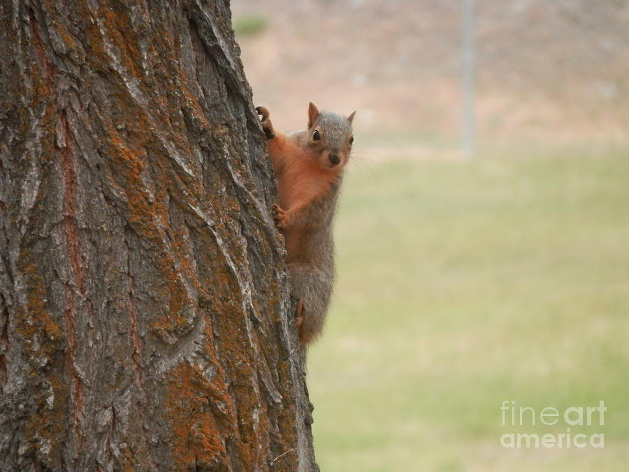 Squirrel Photograph - Playing Games by Margaret McDermott
