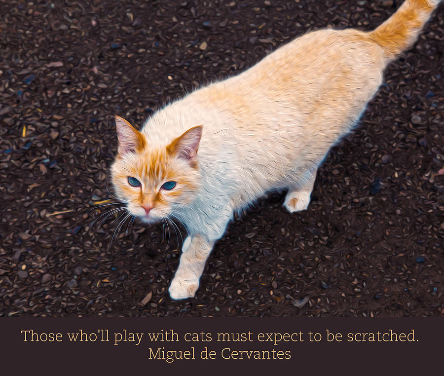 Playing With Cats Digital Art - Playing With Cats by Omaste Witkowski
