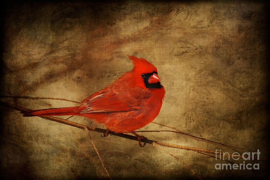 Bird Photograph - Please Feed The Birds by Lois Bryan