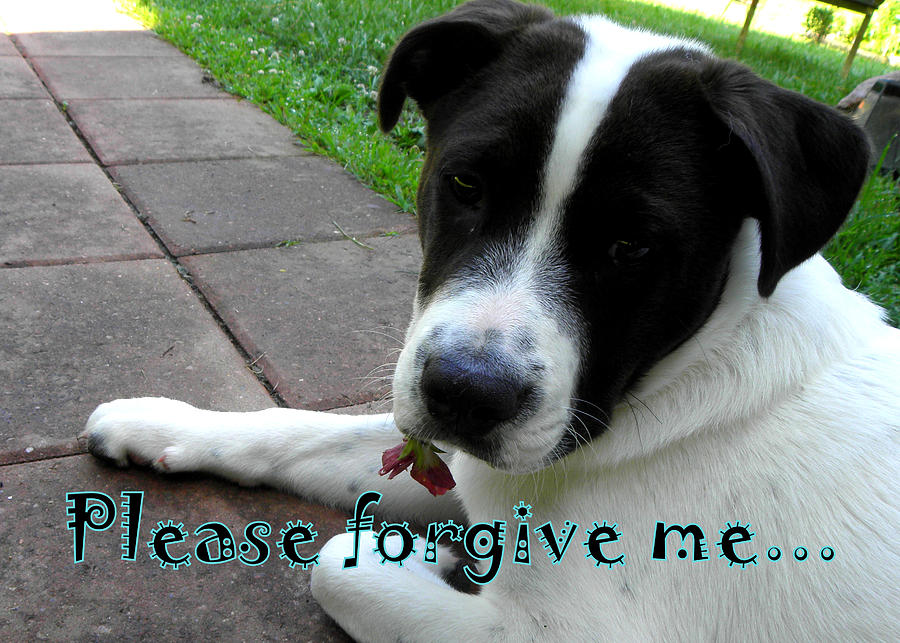 Matte Print Photograph - Please Forgive Me  by Kim Galluzzo Wozniak