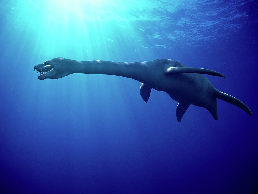 Plesiosaurus Photograph - Plesiosaur by Christian Darkin