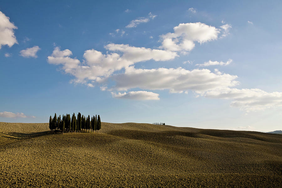 Ploughed Fields And Cypress Trees Photograph by Walter Zerla