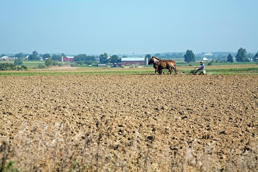 Animal Photograph - Ploughing On An Amish Farm by Jim West