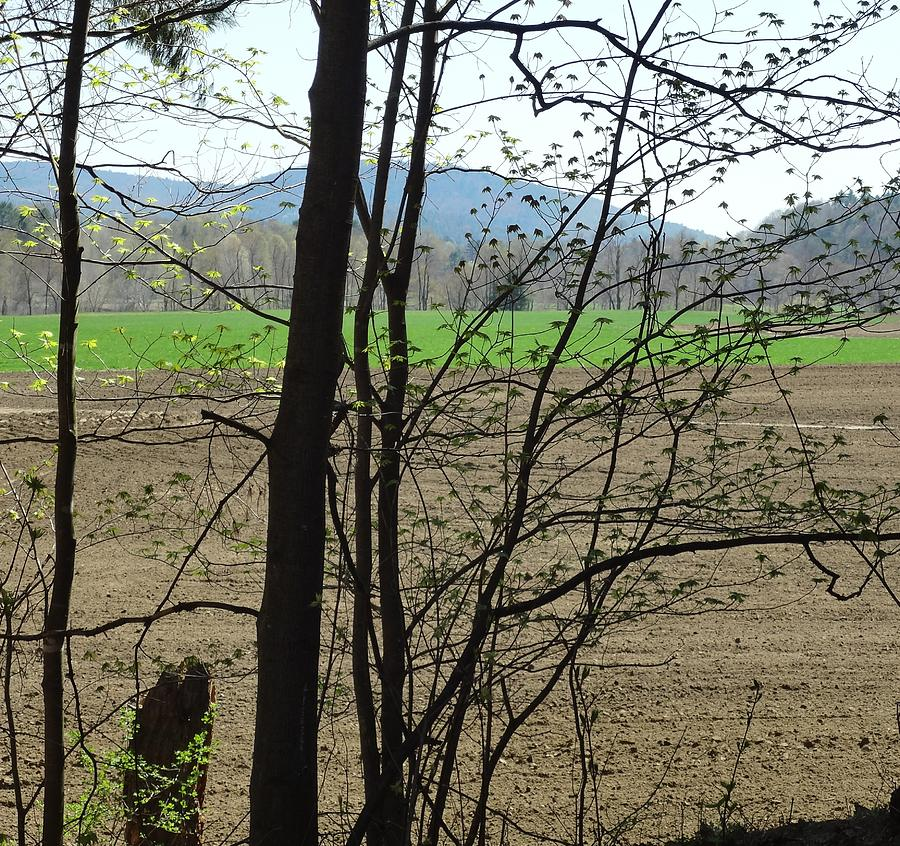 Field Photograph - Plowed by Catherine Arcolio
