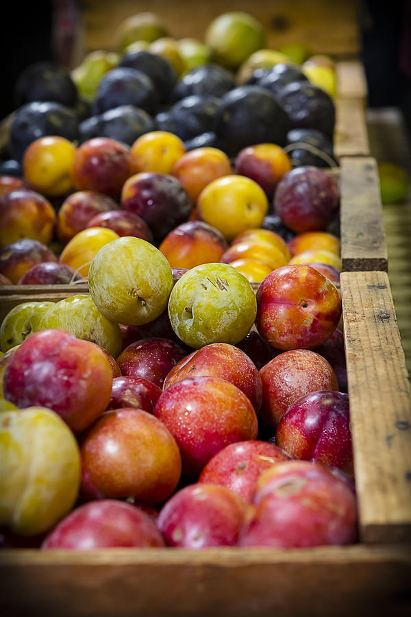 Plums Photograph - Plum Gorgeous by Caitlyn  Grasso