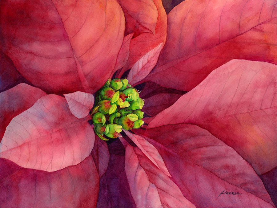 Plum Poinsettia Painting