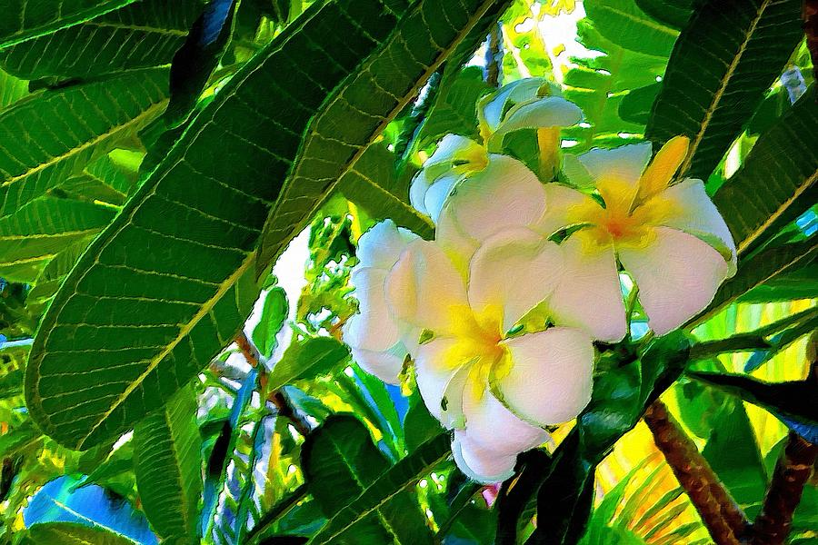 Plumeria Beauty by Florian Rodarte