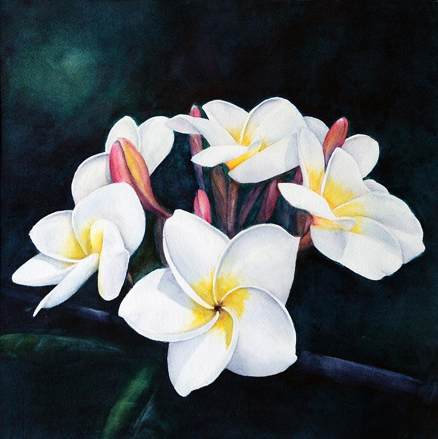 Hawaii Painting - Plumeria Cluster by Luane Penarosa