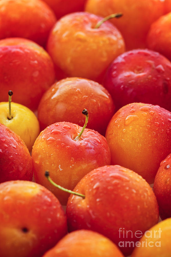 Plums Photograph - Plums  by Elena Elisseeva