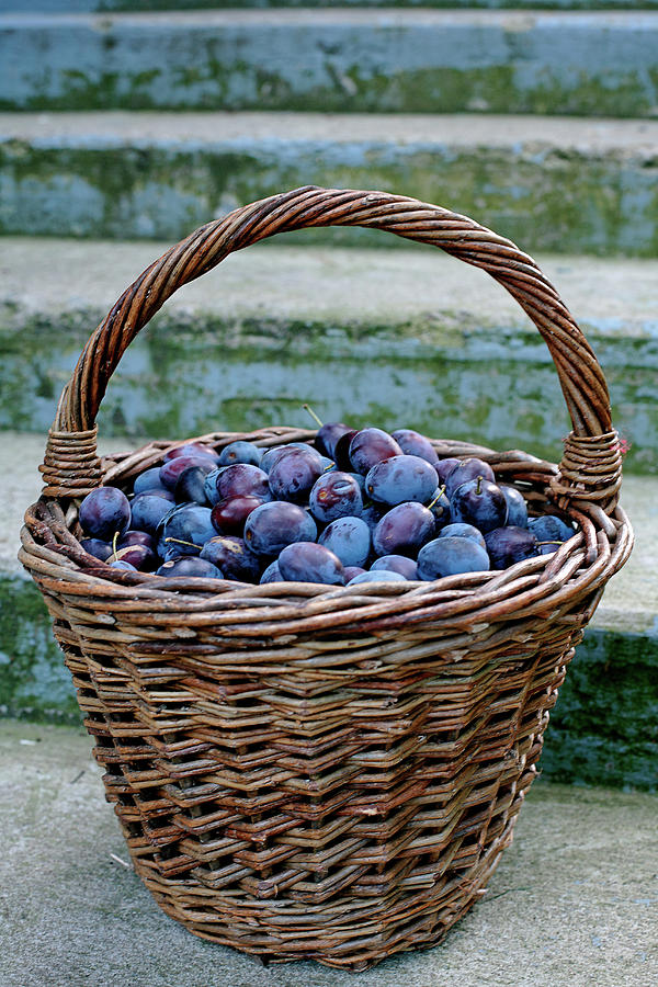 Vertical Photograph - Plums In A Basket, Southern Bohemia by Panoramic Images