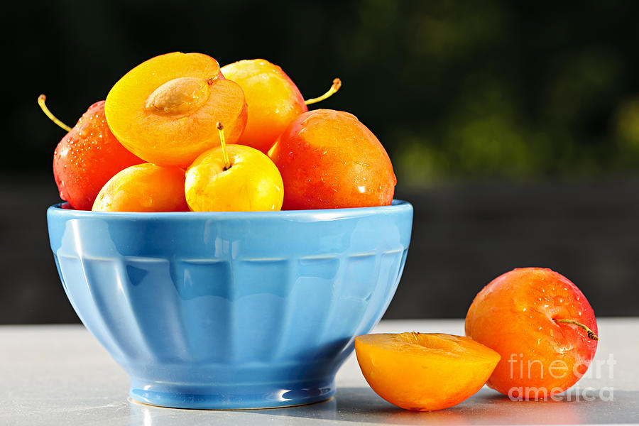 Plums Photograph - Plums In Bowl by Elena Elisseeva