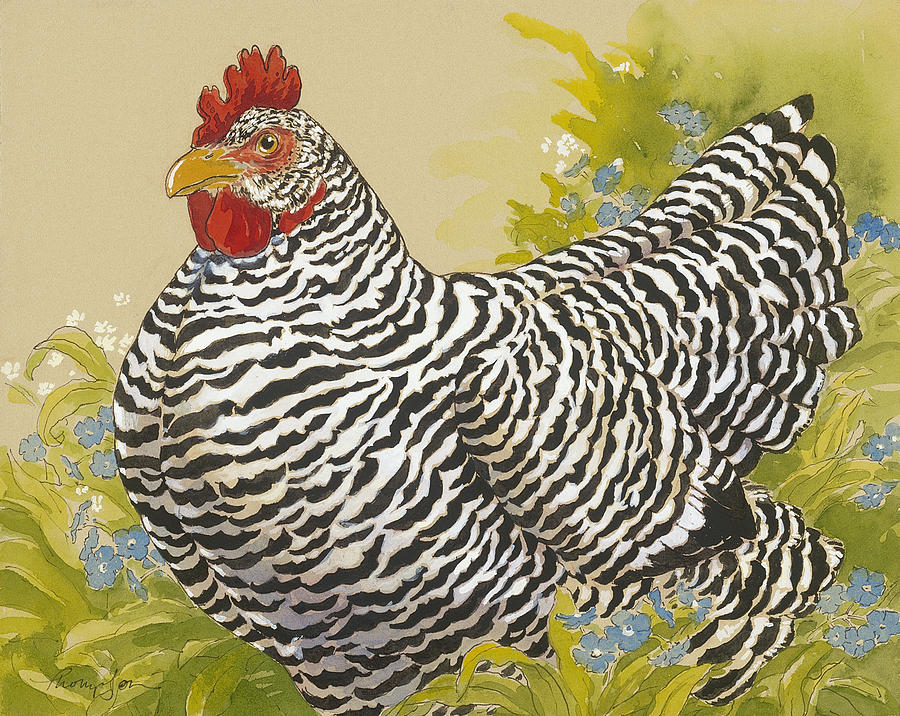 Chicken Painting - Plymouth Rock Hen 4 by Tracie Thompson