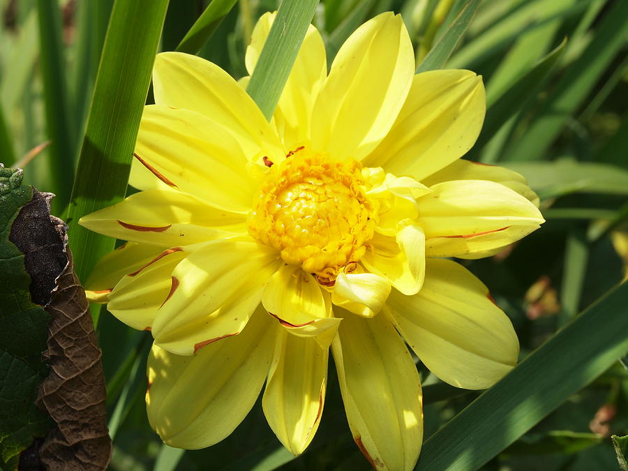Yellow Photograph - Pocketful Of Sunshine by Valeria Donaldson