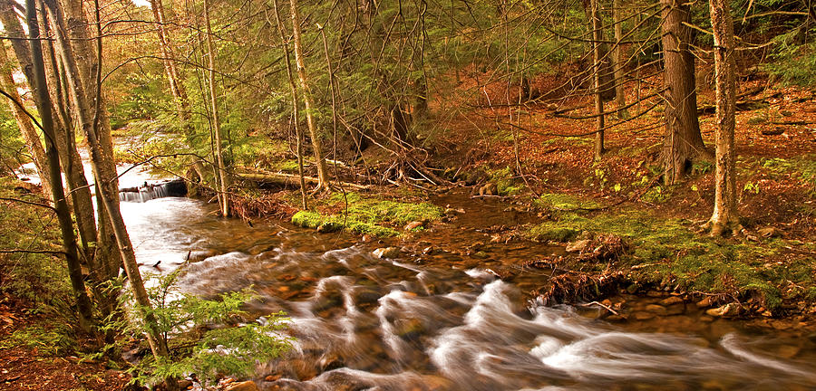 Pennsylvania Photograph - Pocono Mountain Stream Pennsylvania by A Gurmankin