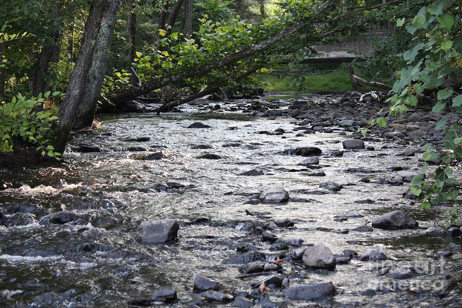 Poconos Gentle Stream Photograph - Poconos Gentle Stream by John Telfer