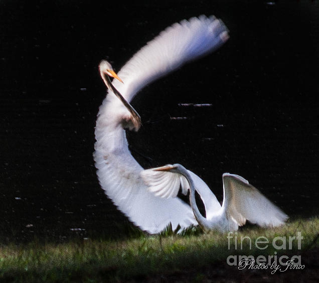 Egret Digital Art - Poetry In Motion 1 by Jinx Farmer