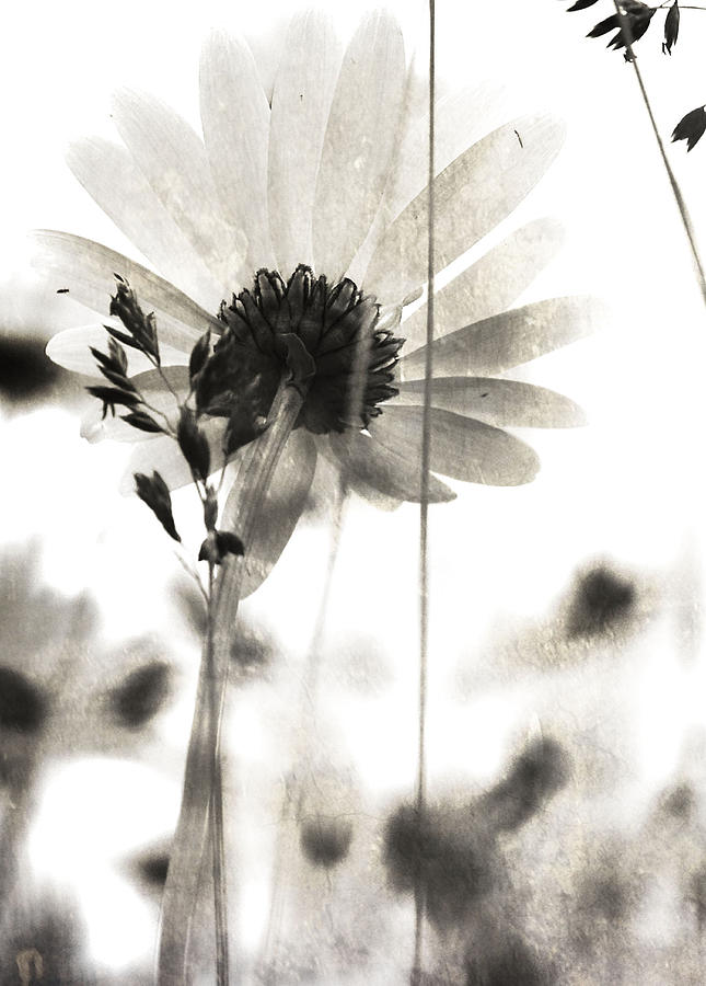 Flowers Photograph - Poets Gain by The Artist Project