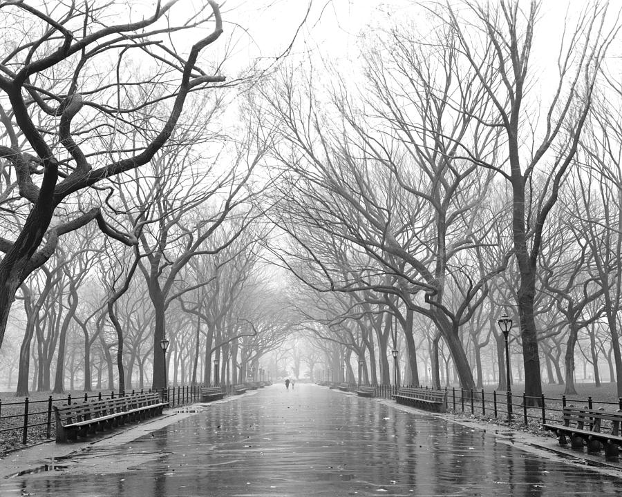 New York City - Poets Walk Central Park by Dave Beckerman