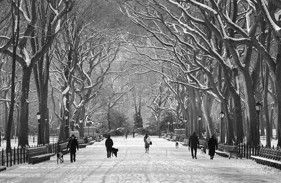 New York City - Poets Walk Winter by Dave Beckerman