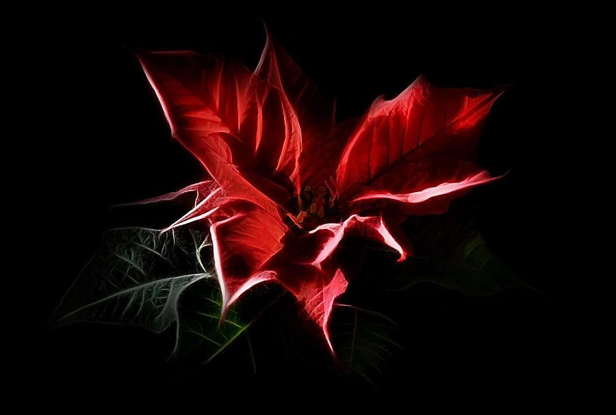 Poinsettia Digital Art - Poinsettia - Christmas Flower by Gynt