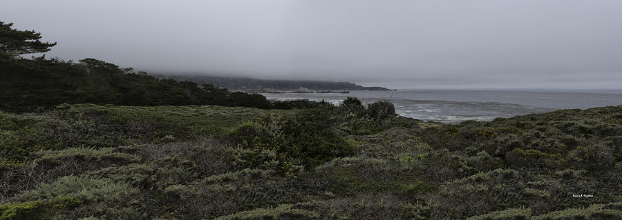 National Park Photograph - Point Lobos National Park by Angela Stanton
