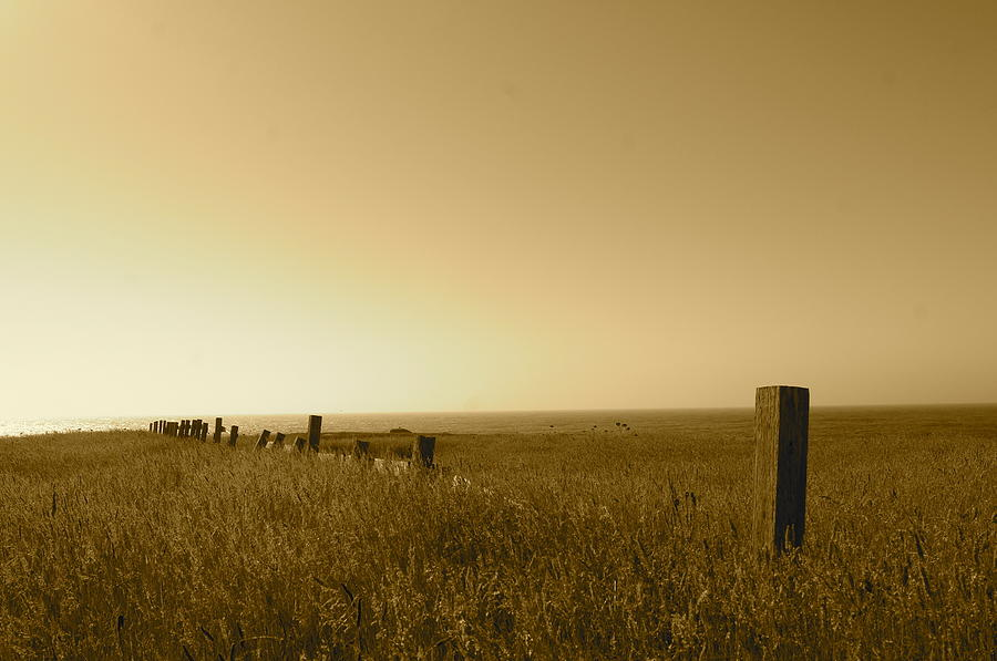 Landscape Photograph - Point Reyes Field by Colleen Renshaw