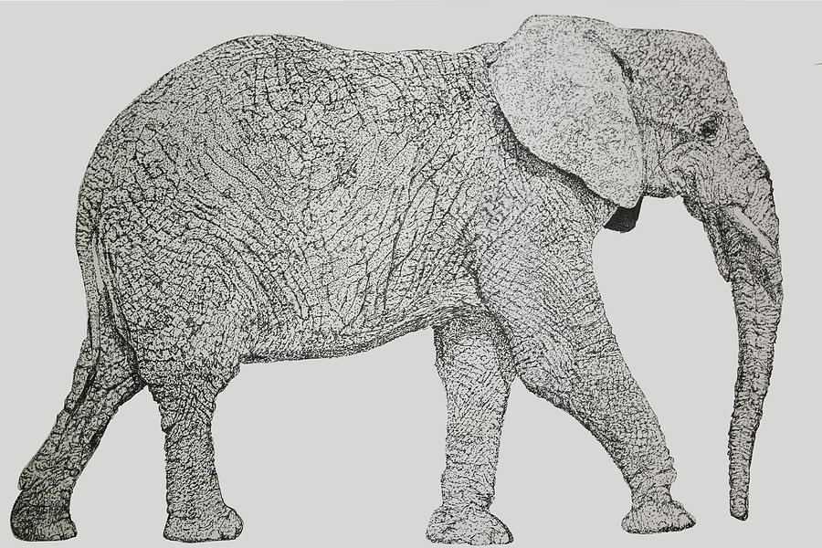 Nature Drawing - Pointillism Elephant by Terence Leano