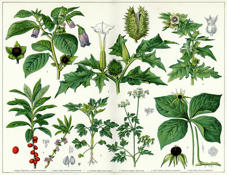 Poisonous Plants Digital Art by Duncan1890