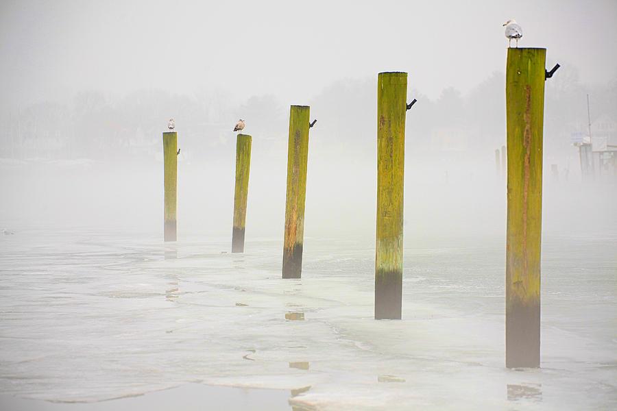 Harbor Photograph - Poles by Karol Livote
