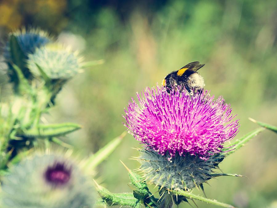Pollination Agent II Photograph