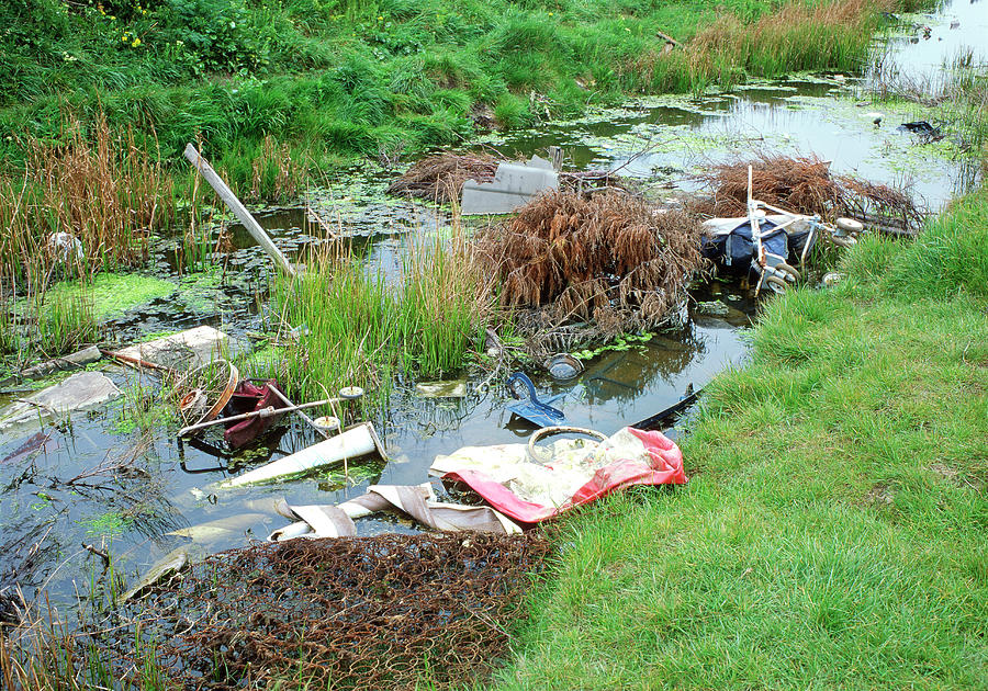 Rubbish Photograph - Polluted Stream by Robert Brook/science Photo Library