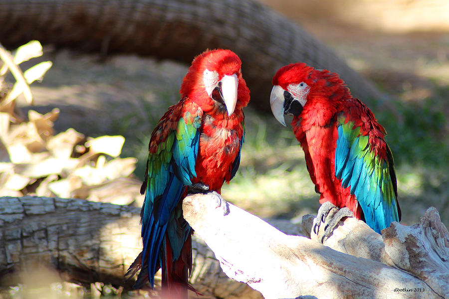 Zoo Photograph - Polly And Pauly by Dick Botkin