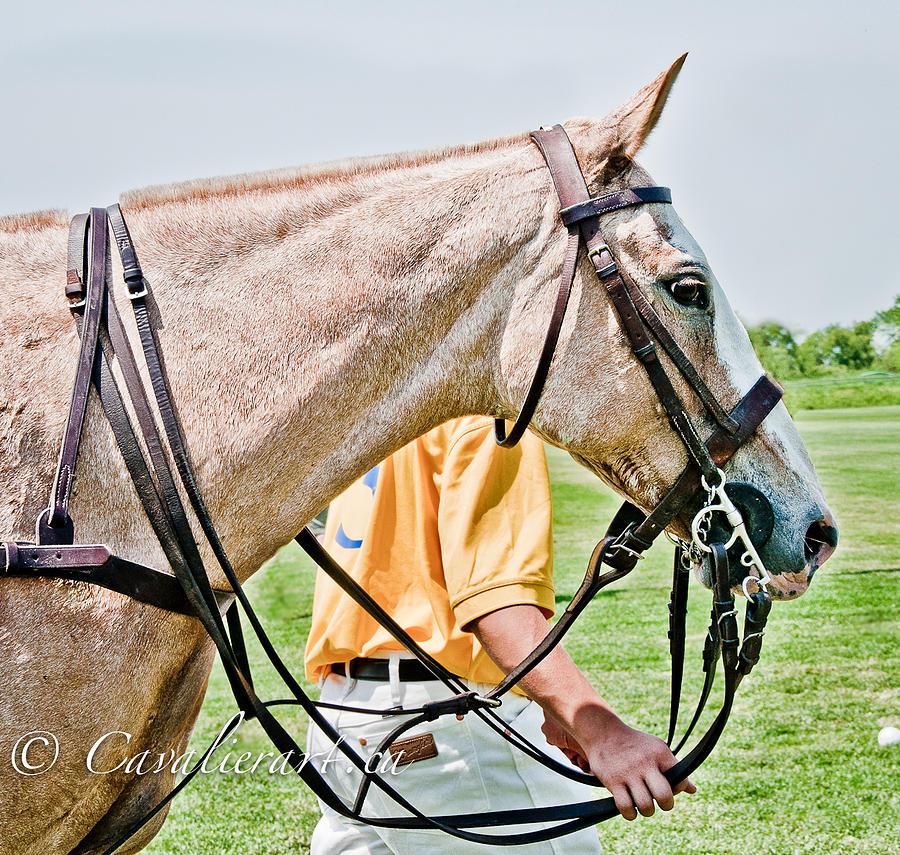 Polo Photograph - Polo Pony by Sherri Cavalier