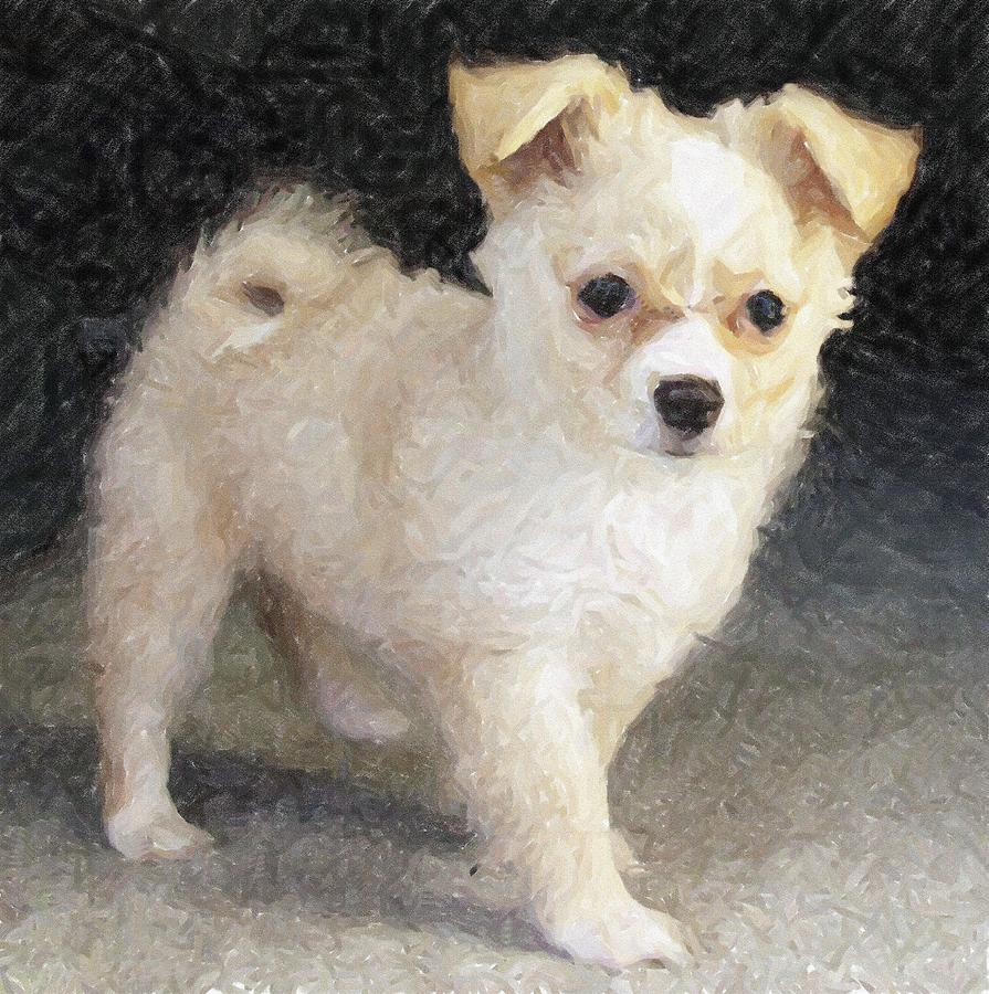 Pomchi Dog by Olde Time  Mercantile