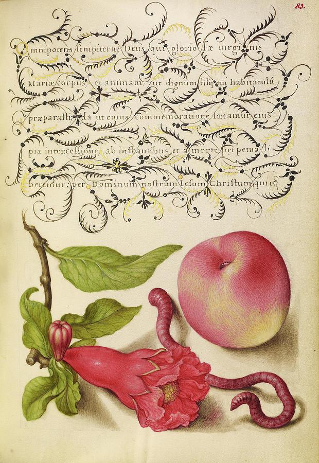 Pomegranate Painting - Pomegranate, Worm, And Peach Joris Hoefnagel, Flemish by Litz Collection
