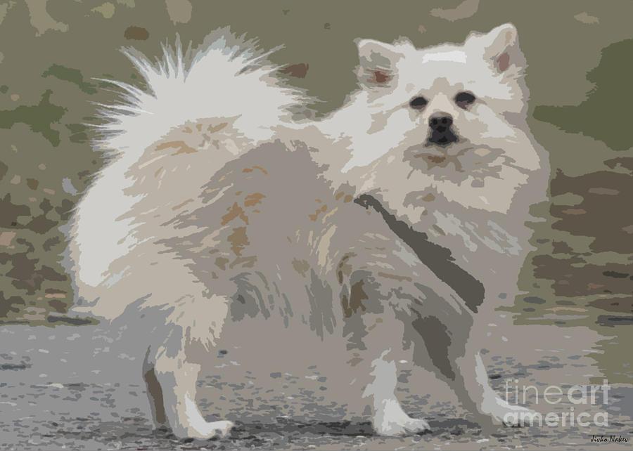 Dogs Photograph - Pomeranian Dog by Jivko Nakev