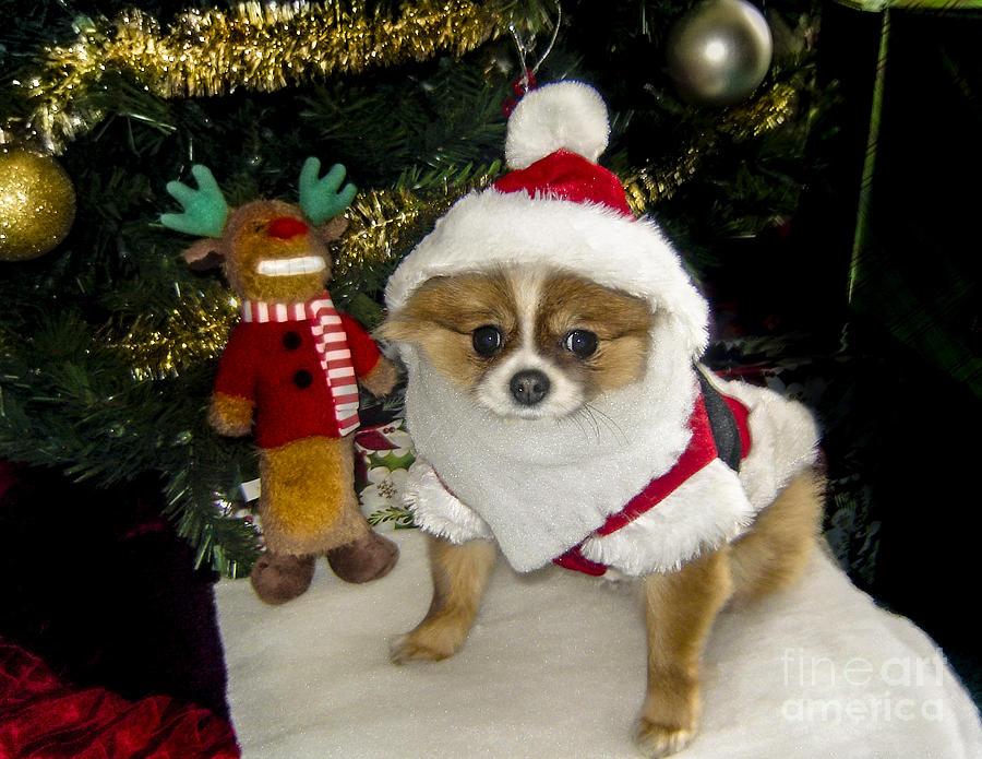 Pomeranian Santa by Gary Keesler
