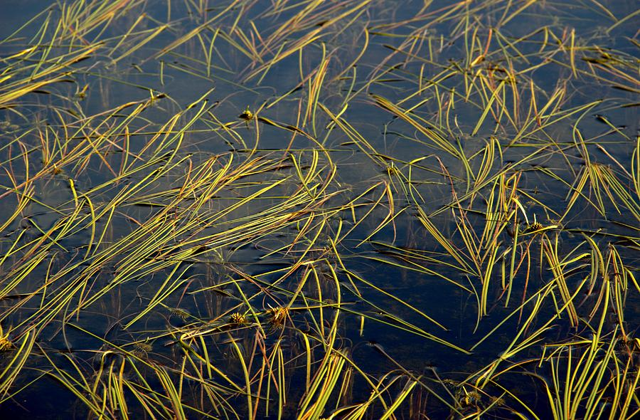 Ponds Photograph - Pond Grass by Marv Russell