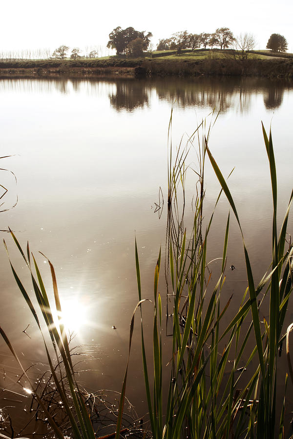 Water Photograph - Pond by Les Cunliffe