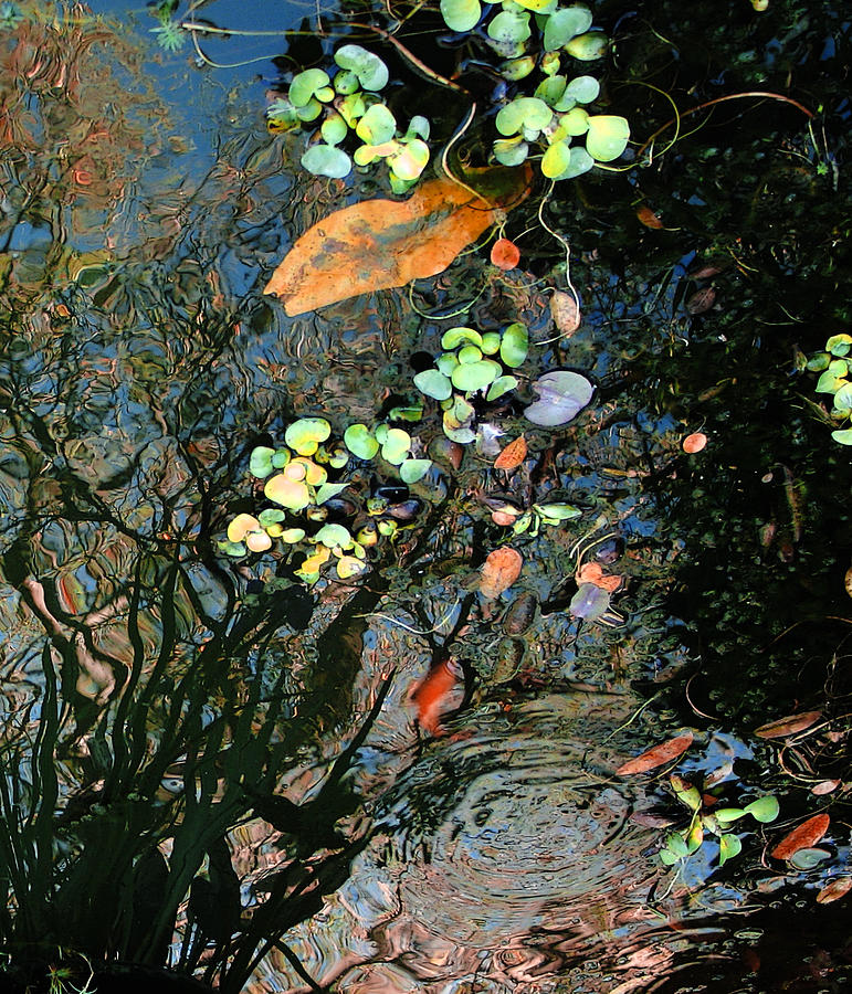 Pond Reflections in Abstraction by Studio Tolere