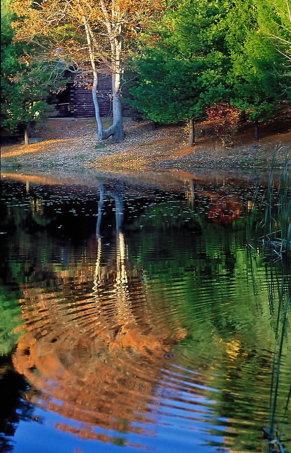 Pond Photograph - Pond Reflections by William McEvoy