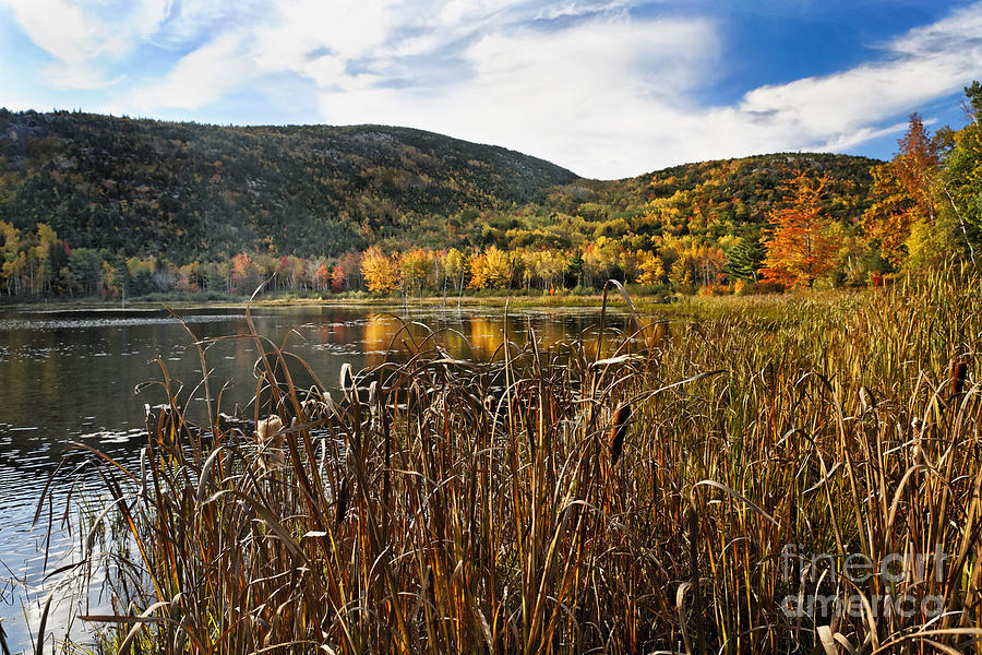 Acadia Photograph - Pond With Autumn Foliage  by George Oze